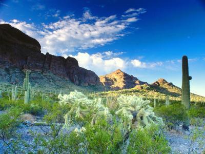 Escursionismo a Fountain Hills, Arizona