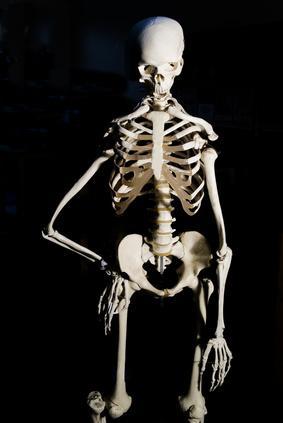 Fatti su scheletro e ossa