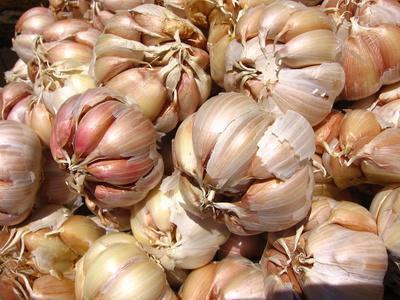 Di aglio può abbassare la glicemia?