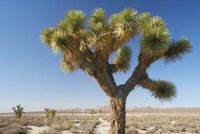 È Yucca una buona dieta alimentare?