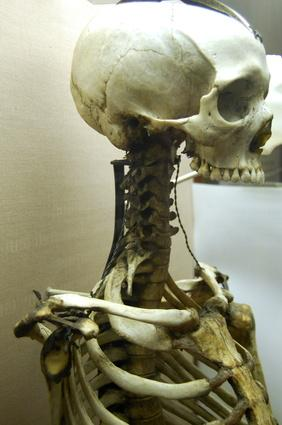 Come funziona il sistema scheletrico con altri sistemi nel vostro corpo