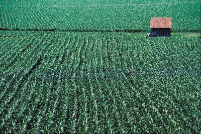 Perché è vietato alta fruttosio sciroppo di mais in Europa?