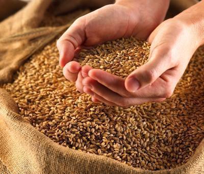Elenco dei cereali integrali a colazione