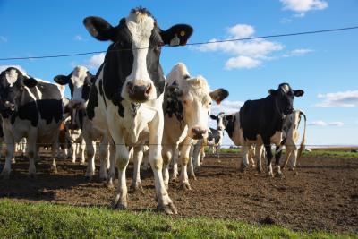 Il latte costruire ossa forti?
