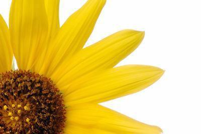 Olio di semi di lino e olio di girasole benefici
