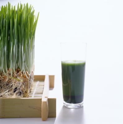 Succo di wheatgrass & cancro