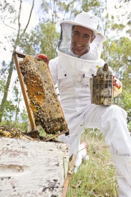 Miele e cannella per il dolore alle gambe