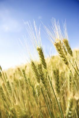 Che cosa gli alimenti naturali contengono biotina e MSM?