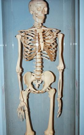 Come calcolare la densità ossea