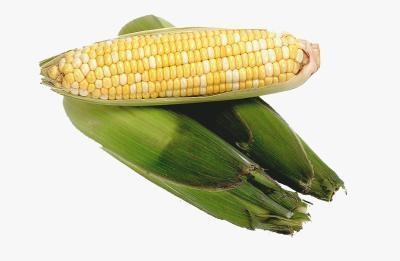 È sicuro di glutine di mais idrolizzato per celiaci?