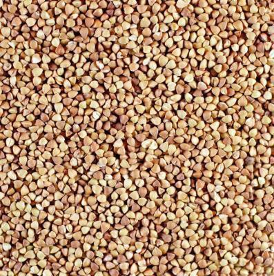 Bulgur vs. germe di grano