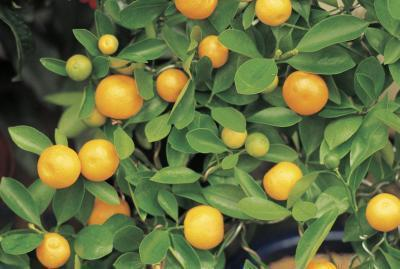 Sono una buona fonte di calcio le arance?