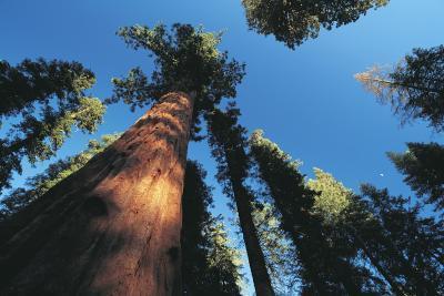 Buoni posti per andare in campeggio entro 2 ore di Modesto, California
