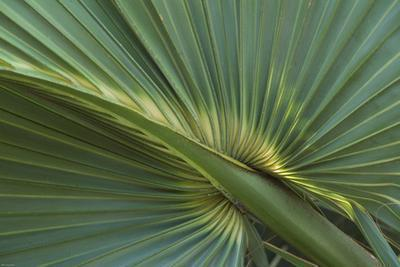 È Saw Palmetto buono per PCOS?