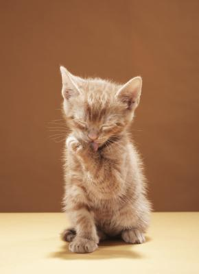 Non una reazione allergica da un gatto produrre un'eruzione cutanea?