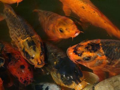 Attrezzi agricoli pesce & attrezzature