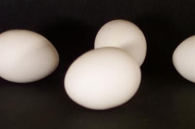 L'importanza della proteina per le persone Obese