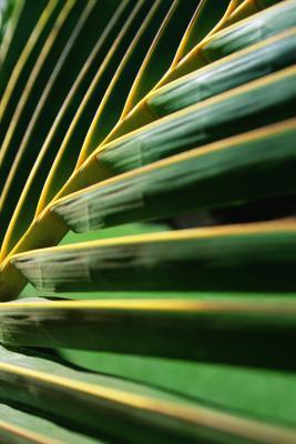 Domenica delle palme giochi per bambini