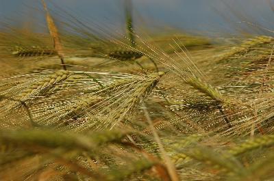 Segni e sintomi della sensibilità al glutine & Candida