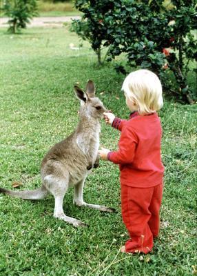 Attività sui canguri per bambini