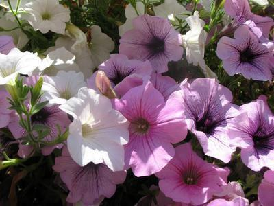 Segni e sintomi delle allergie ai pollini