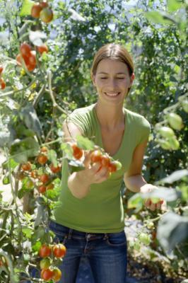 Attività per insegnare ai bambini sull'agricoltura biologica