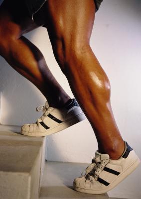 I muscoli sollecitati durante solleva vitello