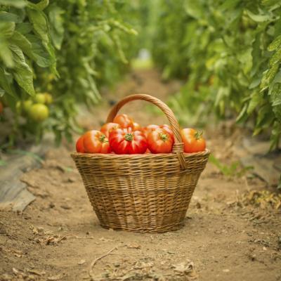 Vantaggi di zuppa di pomodoro