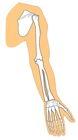 Quello che i muscoli vengono utilizzati in arrampicata su corde?