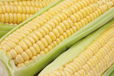 Lista degli alimenti che sono alimenti geneticamente modificati