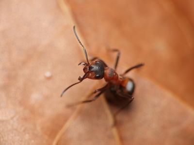 Organici modi per sbarazzarsi di formiche