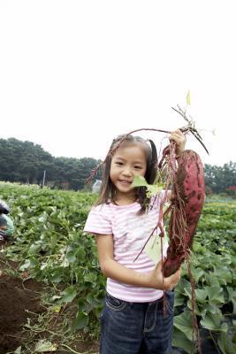 Come preparare le patate dolci foglie per Optimum Nutrition