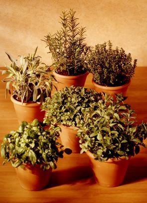 Ci sono erbe medicinali per la gastrite severa?