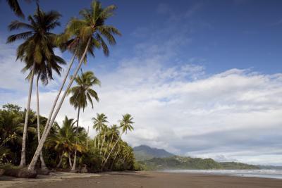 Benefici dell'olio di cocco per fungo & infezioni da lieviti