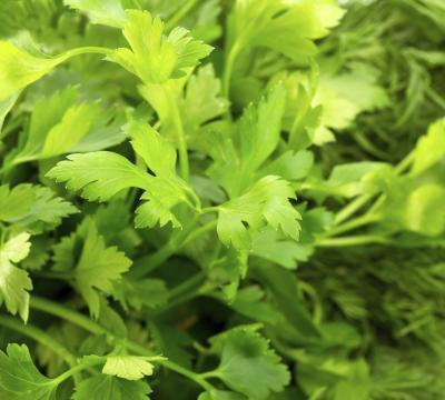 Quali sono i vantaggi di prezzemolo in foglie?