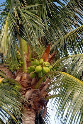 Informazioni nutrizionali dell'olio di Palma