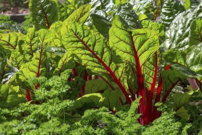 Ortaggi a foglia verdi ad alto contenuto di potassio