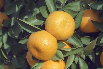 Benefici della vitamina C nella pelle cura
