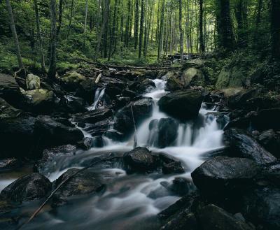 Escursioni presso le cascate del nord della Georgia