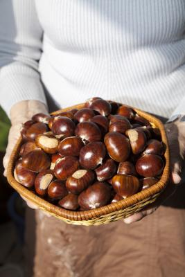 Quali tipi di frutta secca si può mangiare sul veloce Daniel?