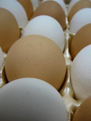 Effetti di supplemento della proteina di siero di latte idrolizzato